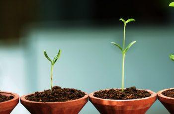 5 passos para implementar uma gestão estratégica  eficiente na sua empresa